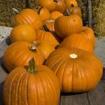 Herbstgenuß - mit Pasta wie aus Italien